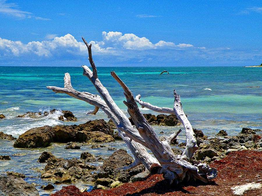Driftwood and the beach at Bahia Honda State Park. Photo by Phil's 1stPix.