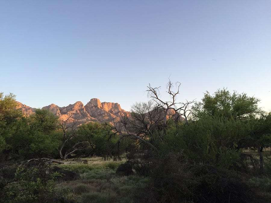 mountains painted in late afternoon sun rise above a mesquite forest