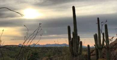 Saguaro cactus near run on mountain, Tucson mountain on the distance