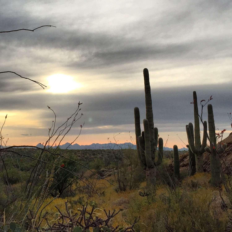 Saguaro cactus near run on mountain, Tucson mountain on the distance