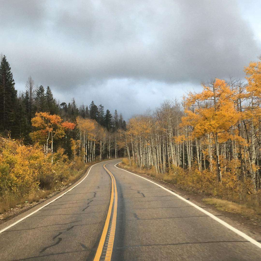 golden aspens line a two lane road