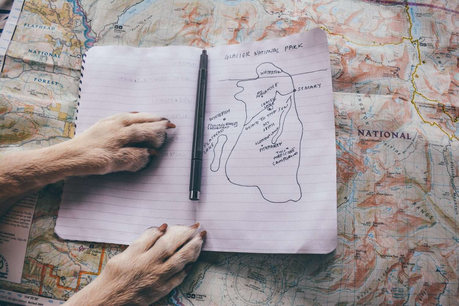 a dog's paws pressed against a handdrawn map of glacier national park