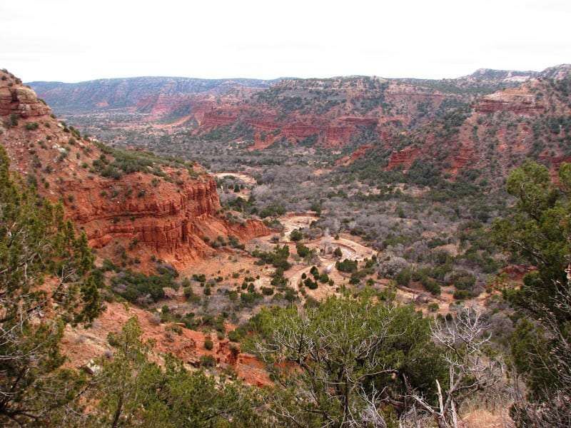 A verdant canyon of junipers against banded rock cliffs