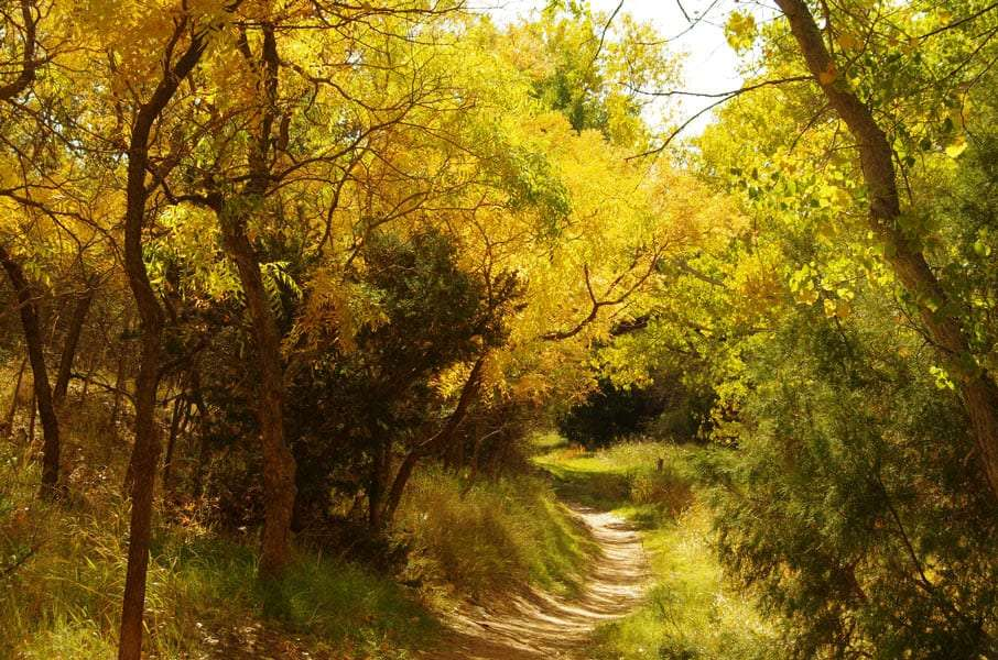 golden leaves in Palo Duro Canyon state park