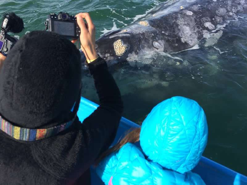 a mother and child photograph a grey whale as it is directly under their panga