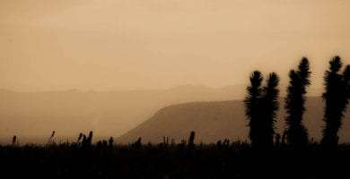 yuccas against a dusky sky and mountains in Baja California