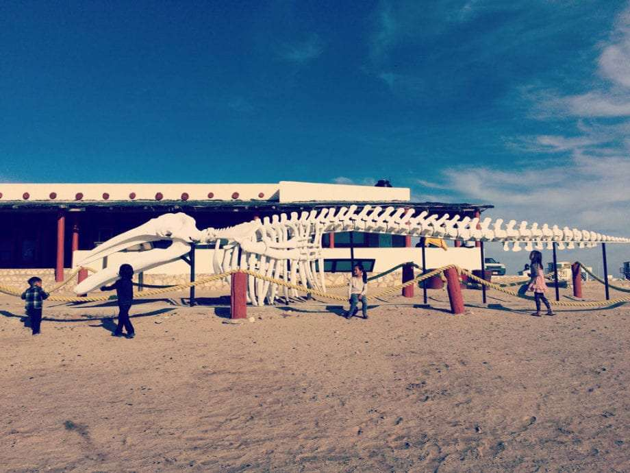 The massive bones of a grey whale at the visitor's center, Ojo de Liebre, near Guerrero Negro in Baja California Sur, Mexico.