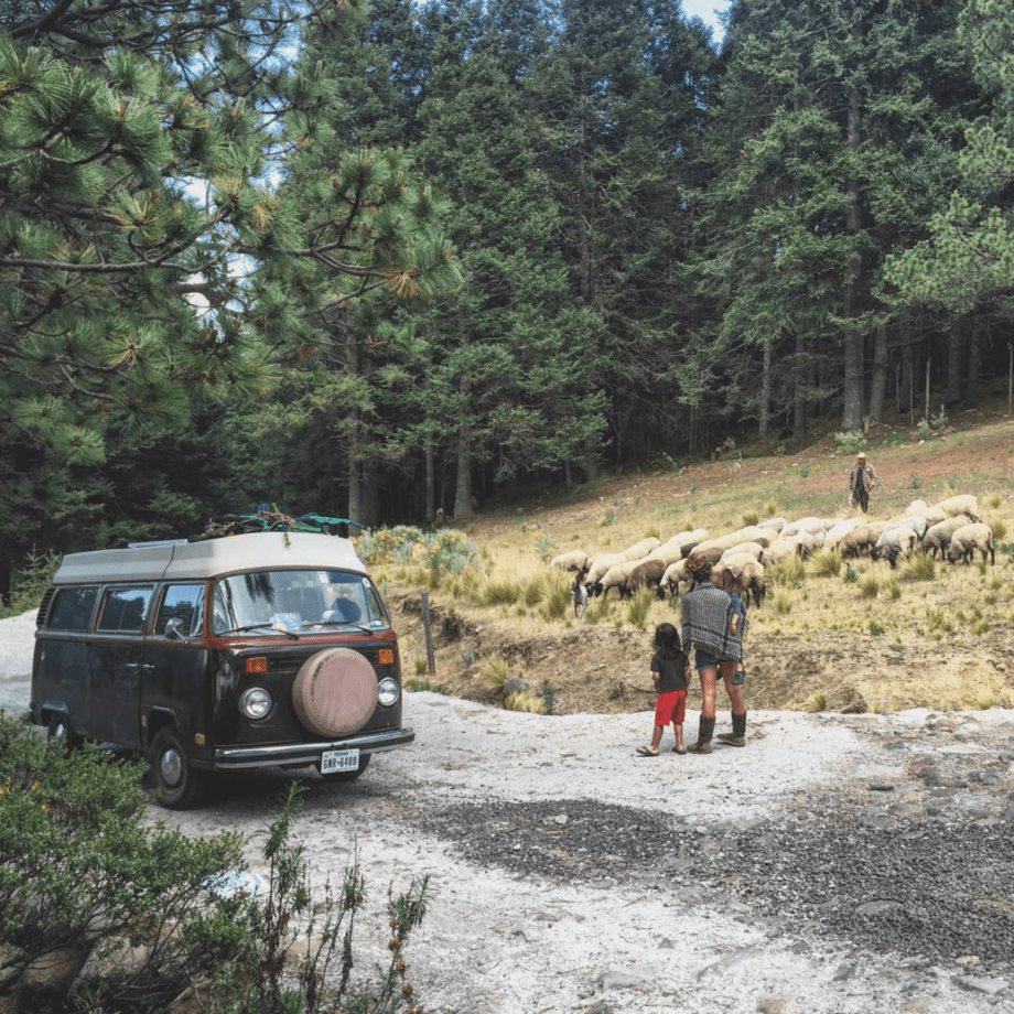 a family stands near their broken down vw bus as a shepherd passes in central Mexico