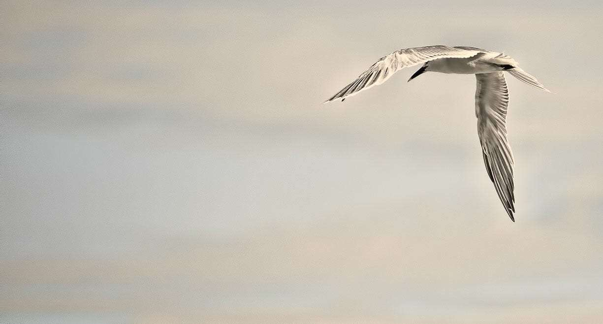 seagull against a cloudy sky