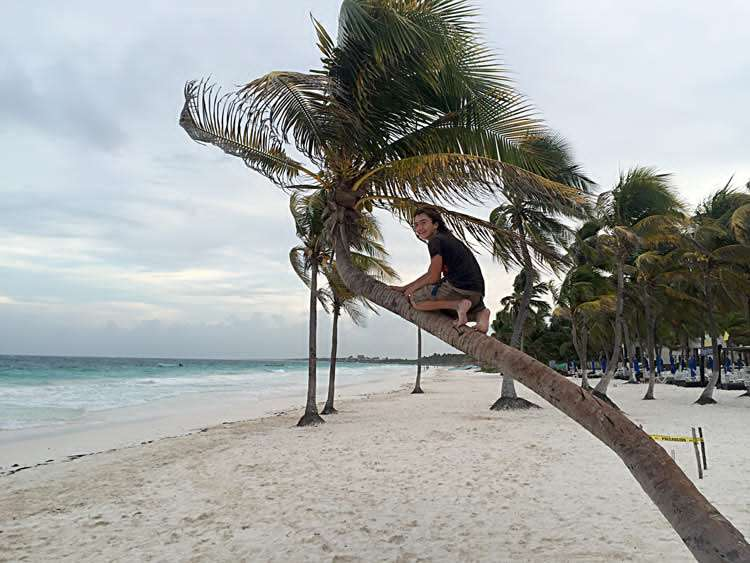 teenager climbing a coconut palm tree in Mexico, along the Caribbean sea near Tulum