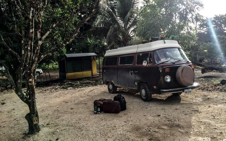 a VW Bus parked near a mango tree