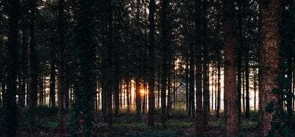 a beautiful forest of conifers