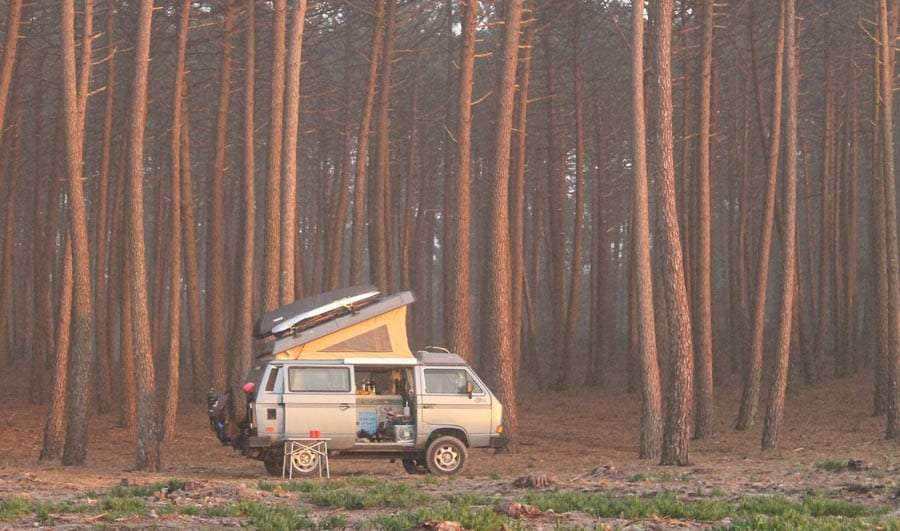 a vanagon parked amongst tall, tall conifers