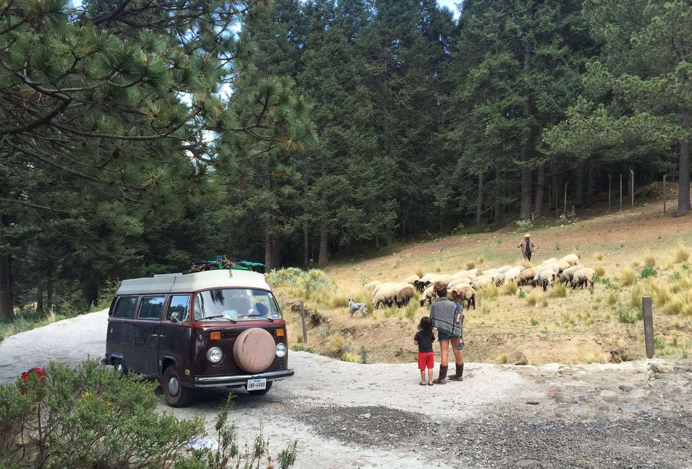 a flock of sheep, a family watches as their VW bus sits at the side of a road.