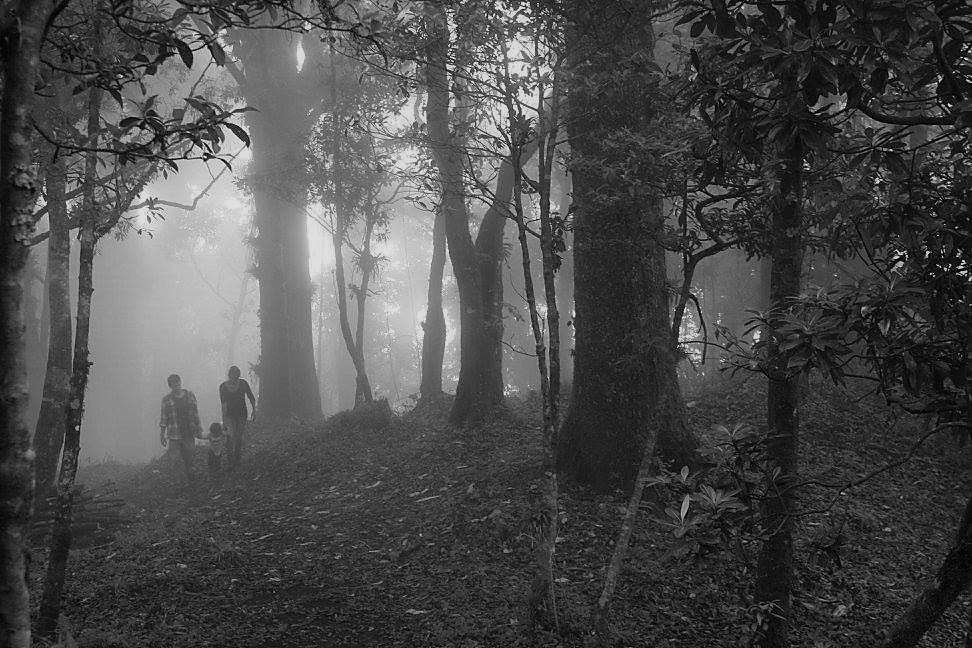 three people walking through a foggy grove of trees