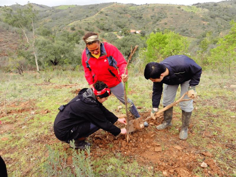 woodland conservation