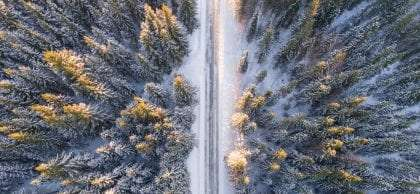 a road cuts through a forest of conifers