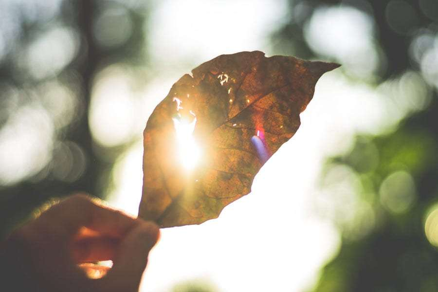 the sun peeks through a leaf held by a human hand