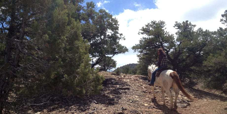 a woman on horseback in the dixie national forest