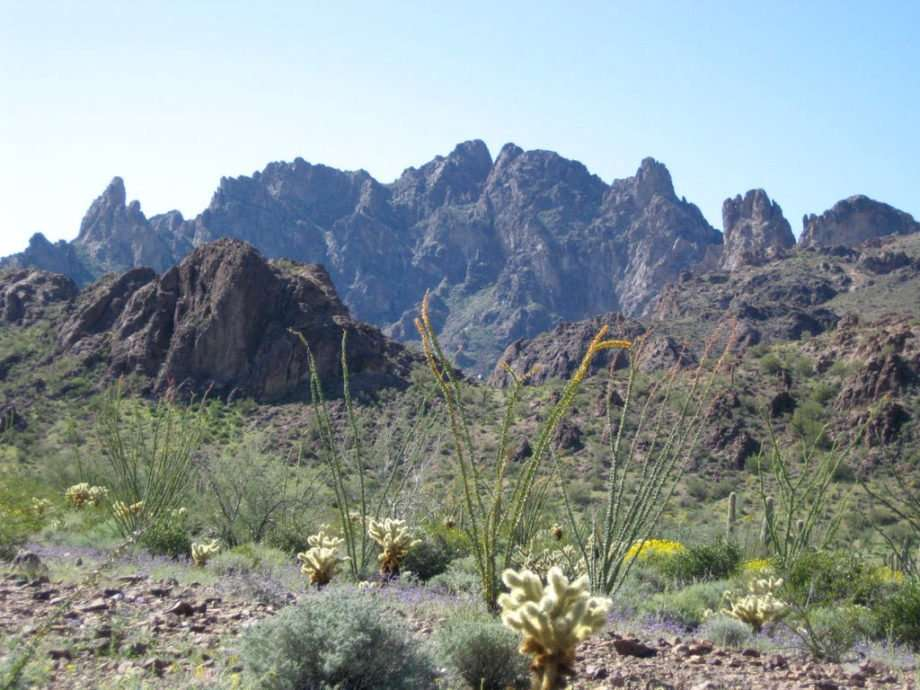 rugged mountains and desert fauna