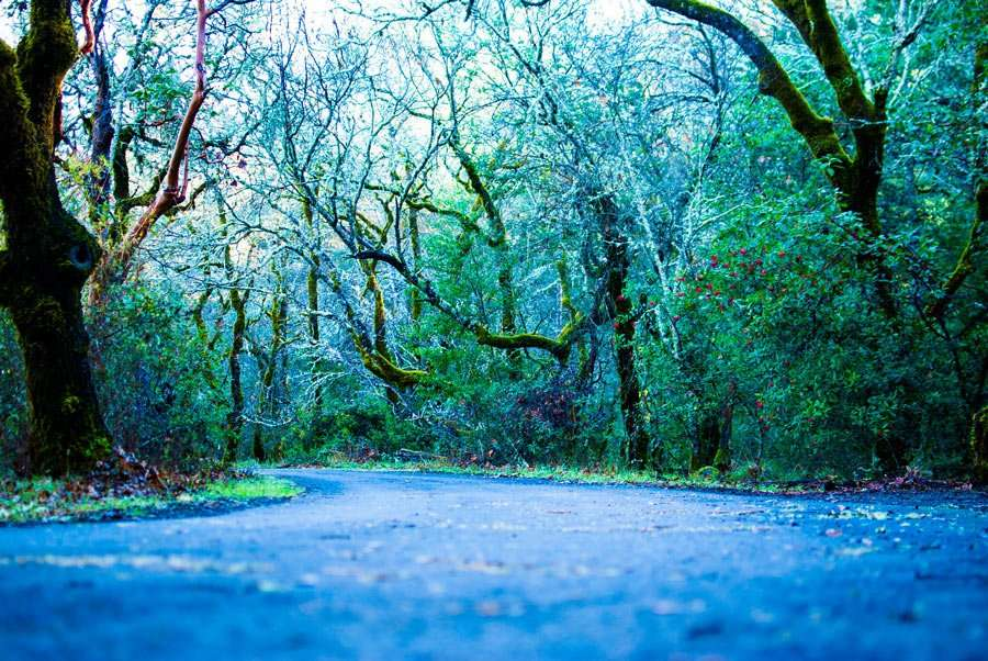 a road through a gorgeous California forest