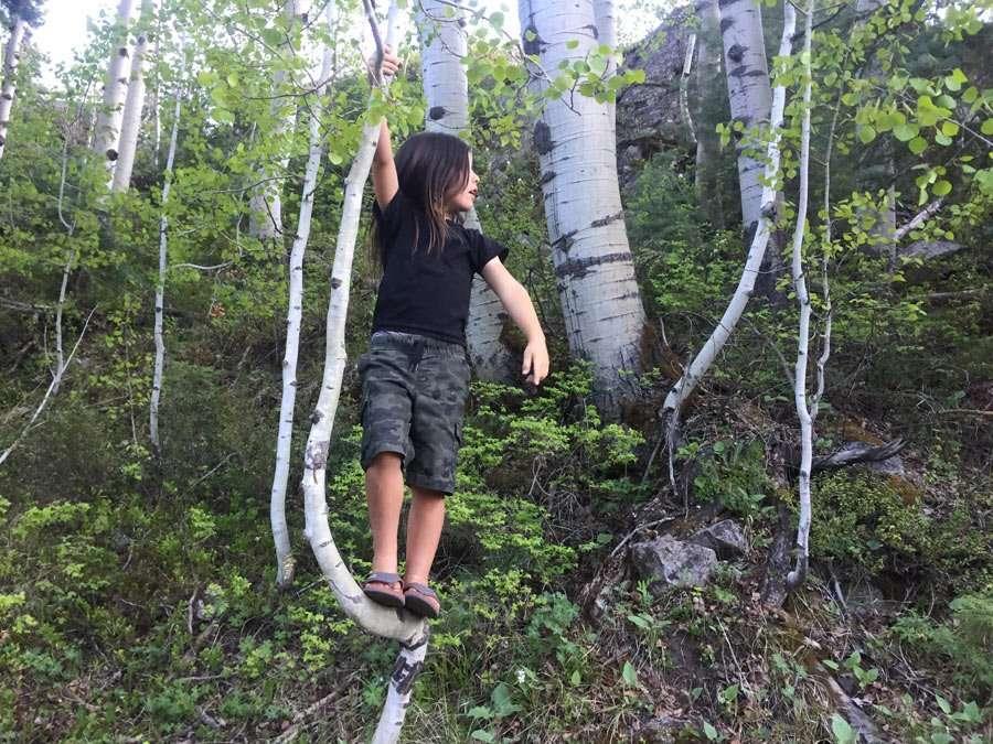 a boy climbing a tree