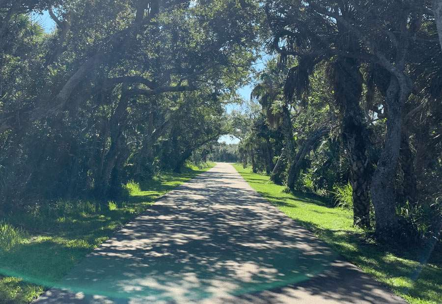 a road between oak scrub separating the ocean from the lagoon