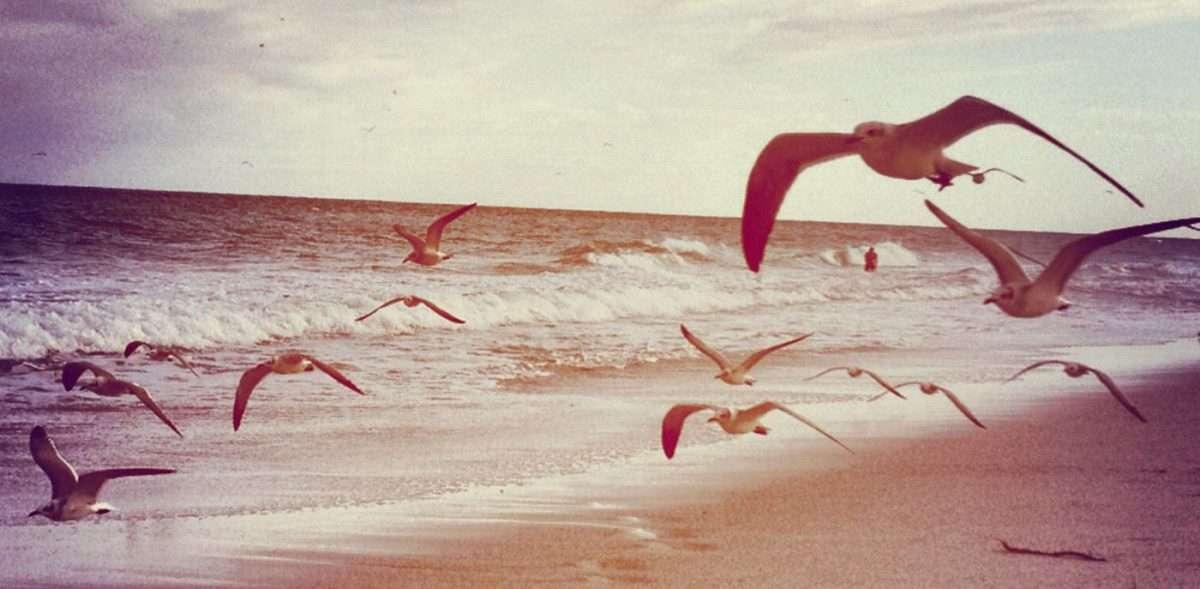 seagulls coast along the atlantic shore