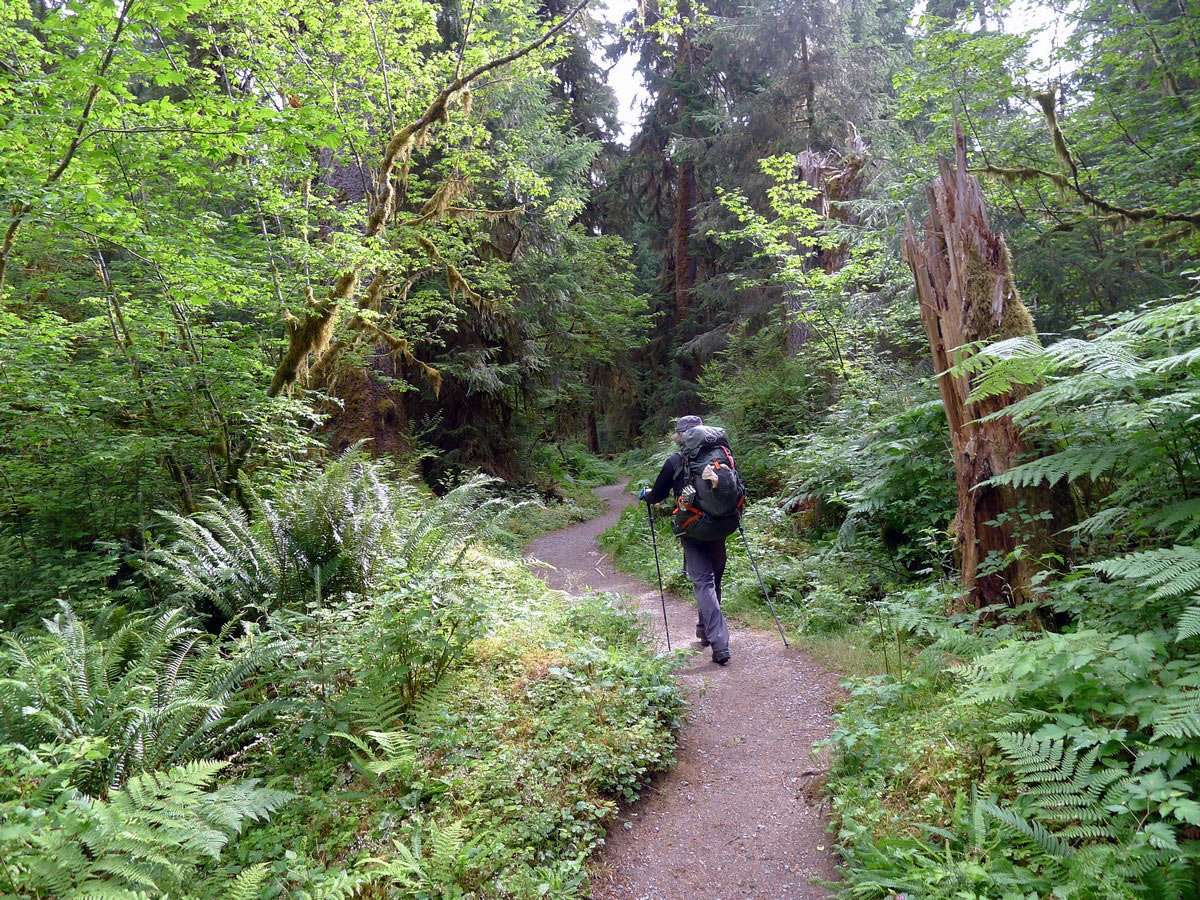A hiker going through the lush vegetation of the Pacific Northwest