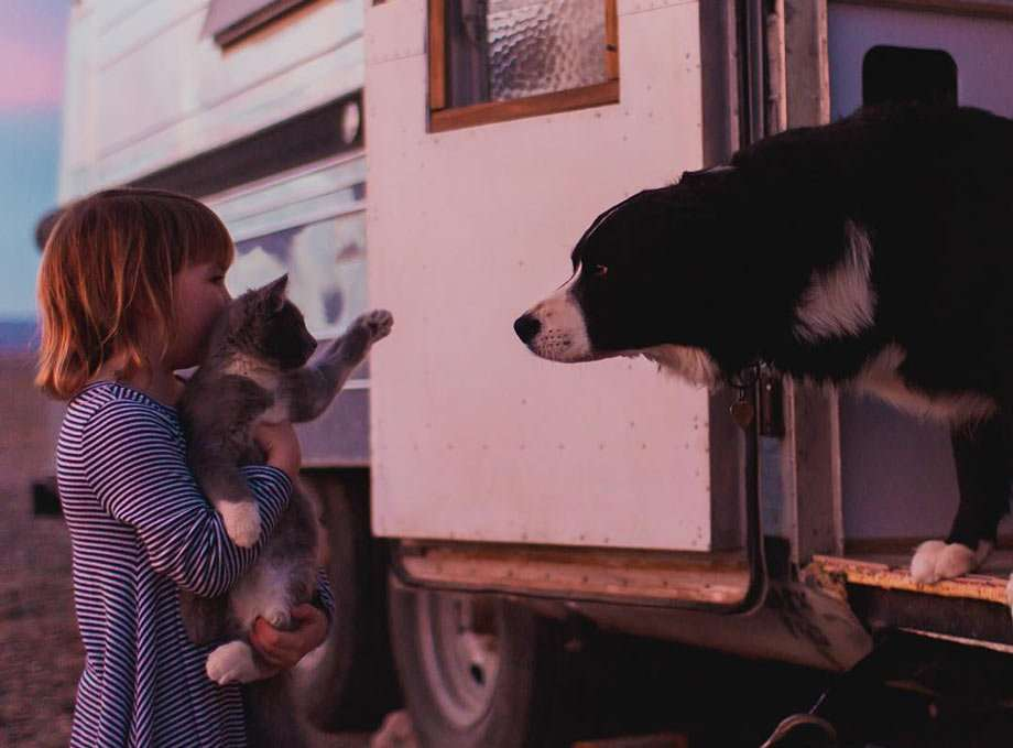 a black and white dog snoops out of the door of a small shiny travel trailer, while a young boy holds a cat's paw extended to greet him