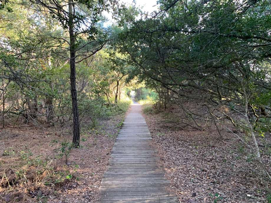 A trail winds through the forest before reaching the marsh