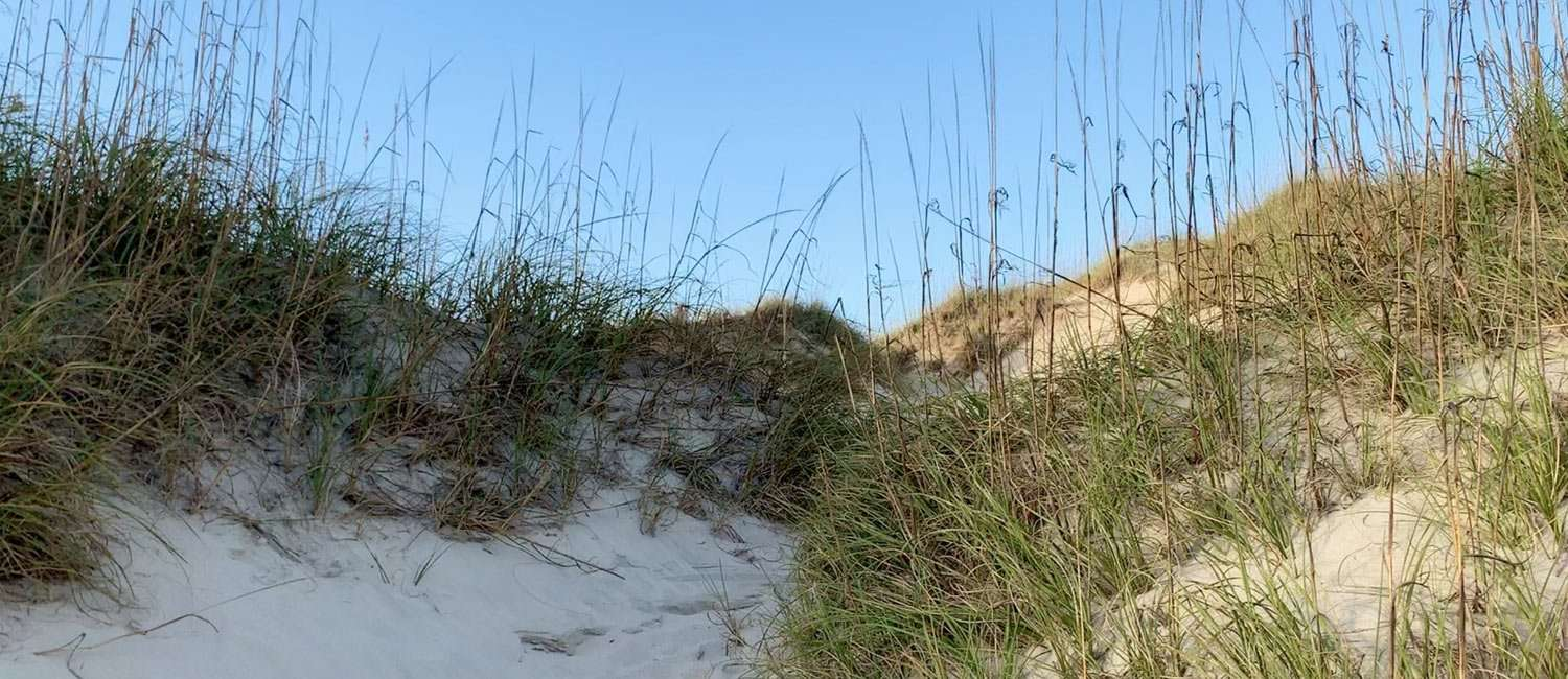 grassy dunes on the Outer Banks