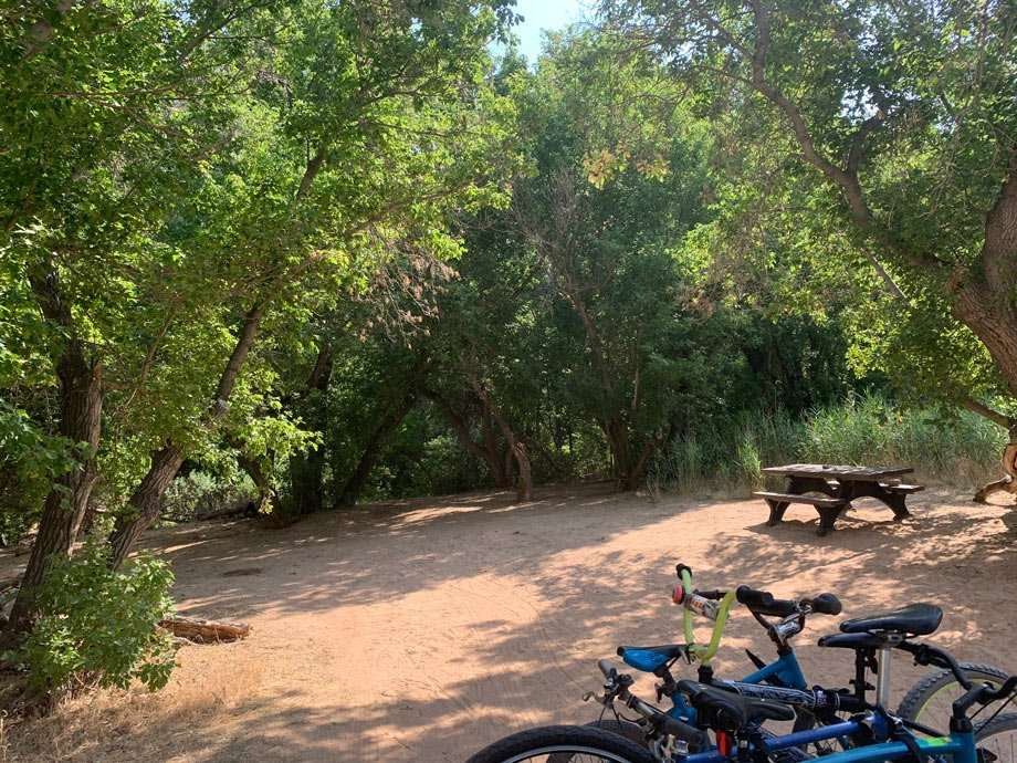 cottonwoods provide ample shade at some of the campsites in echo park campground