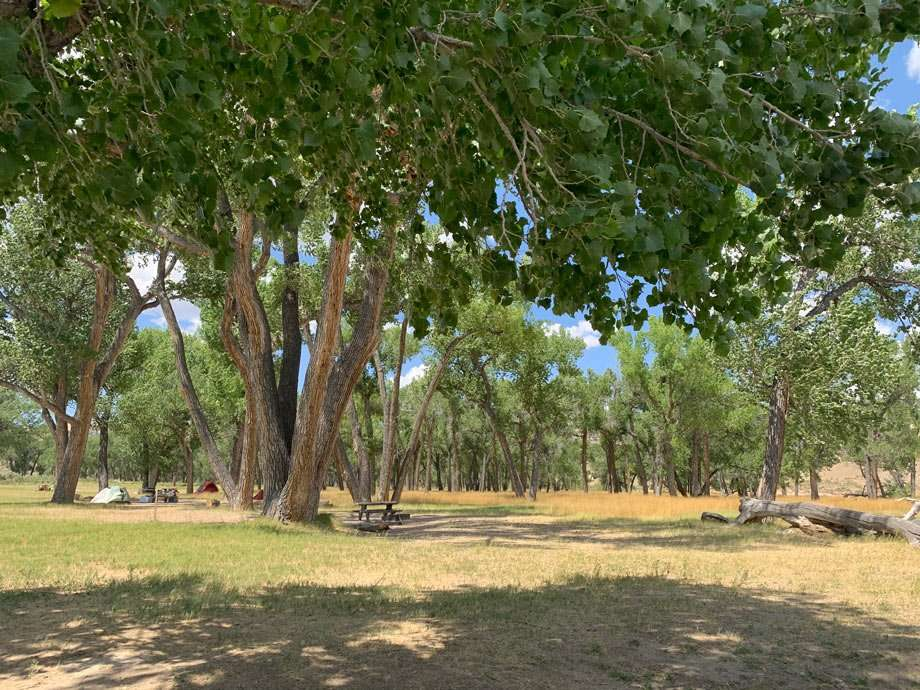 cottonwoods droop shade over tent camping spots