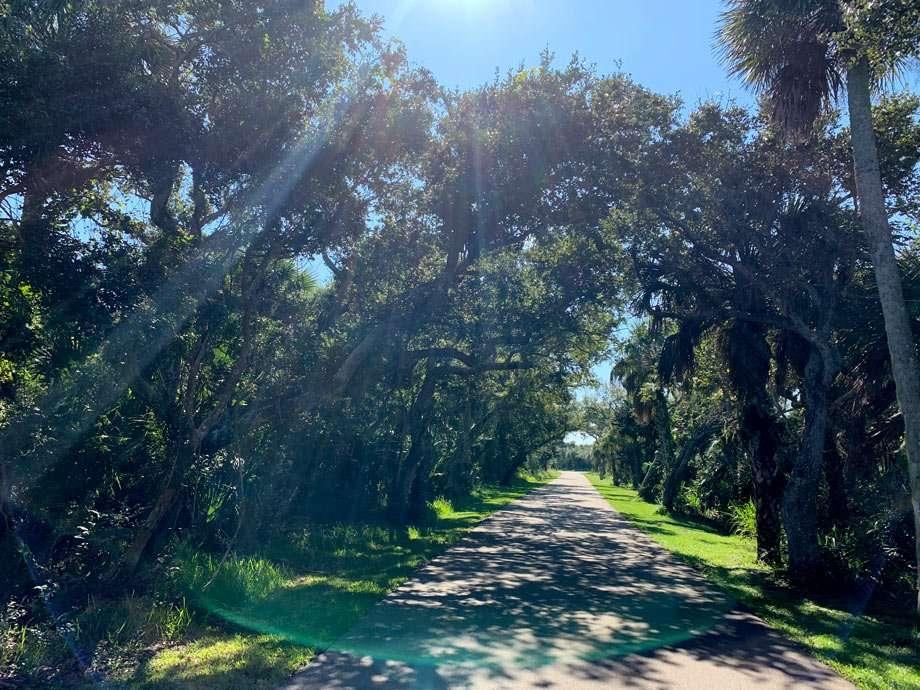 live oak trees droop over a small road