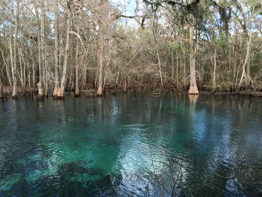 opal blue waters in a cypress forest