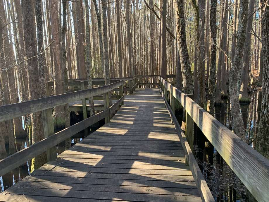 A boardwalk extends into the cypress forest at George L. Smith State Park in Twin City, Georgia