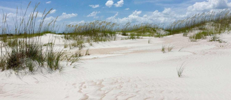 a beach dune covered in grass near Saint Augustine, Florida