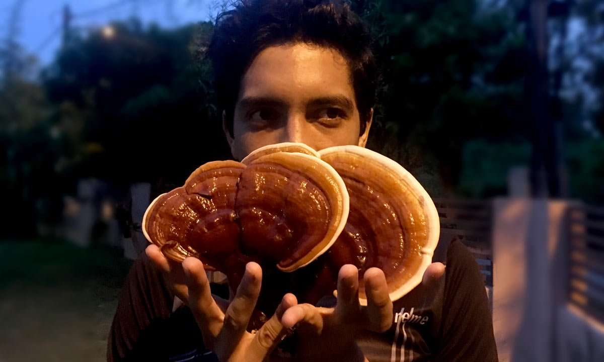 a man holding large, edible mushrooms in southeast asia