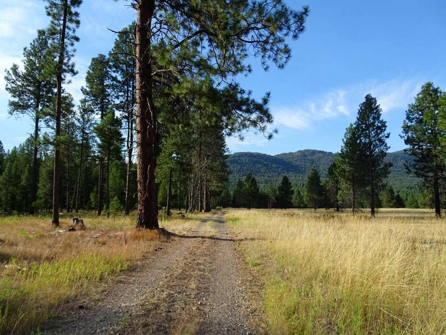a dirt road leads into a meadow and forest