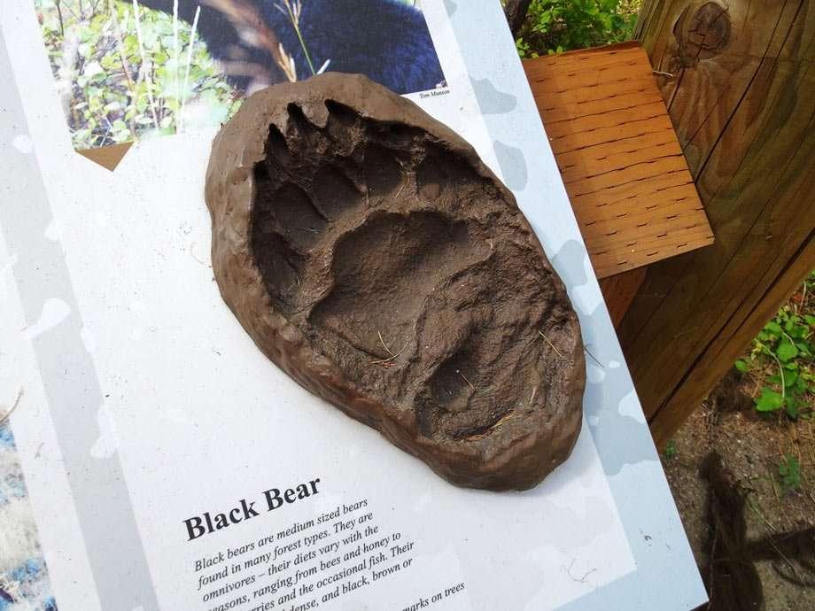 the imprint of a black bear paw