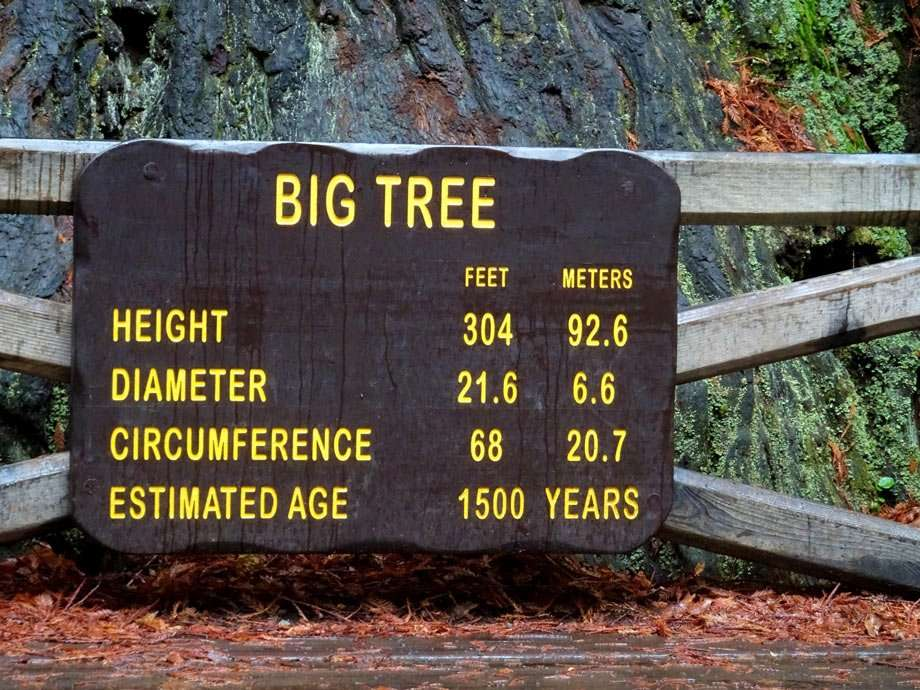 a sign stating the impressive size of a redwood tree