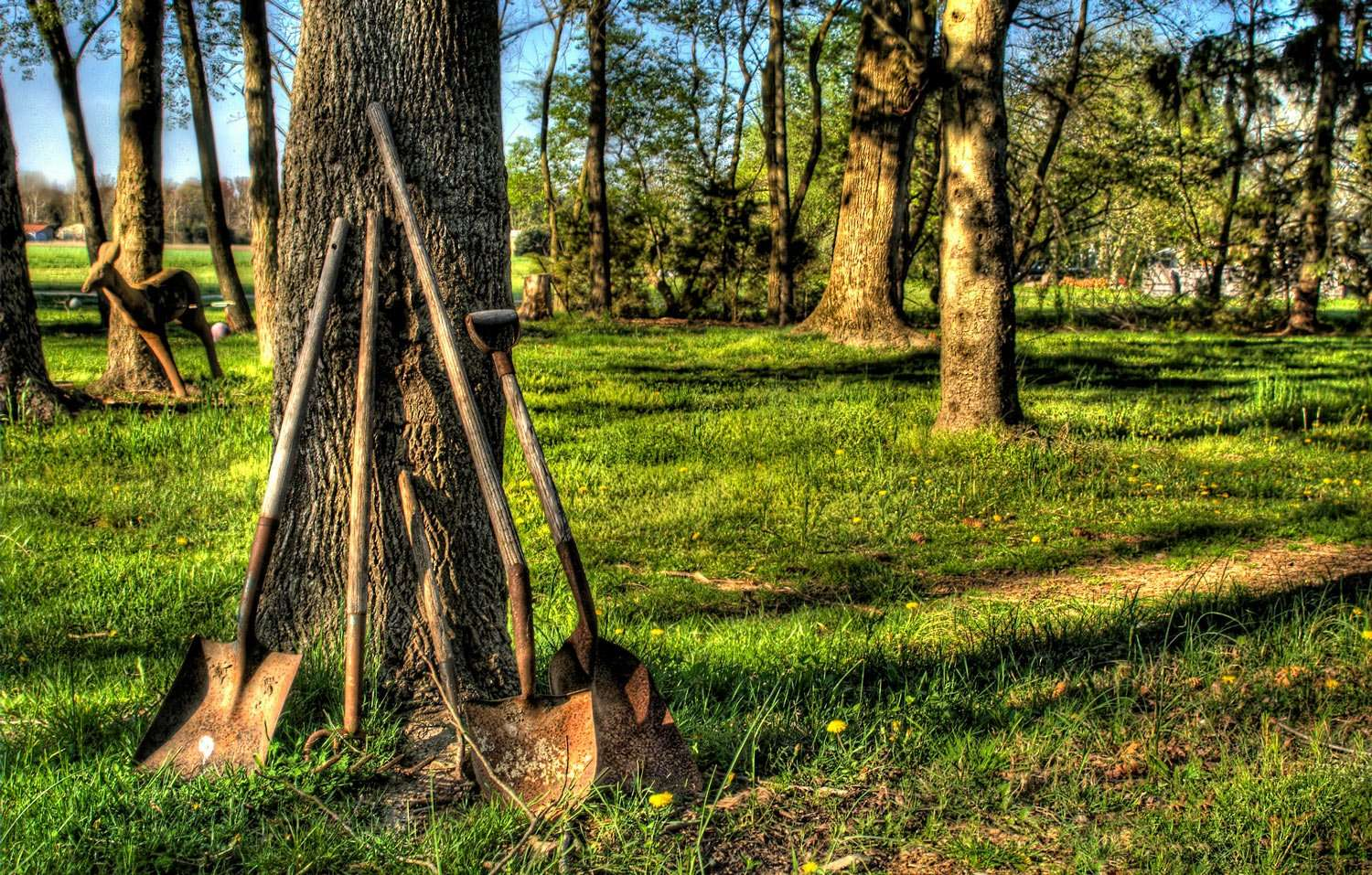 shovels propped against a tree in the forest