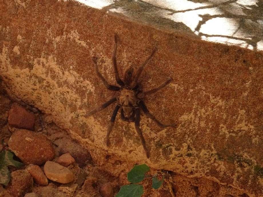 a tarantula clings to a stone cliff wall