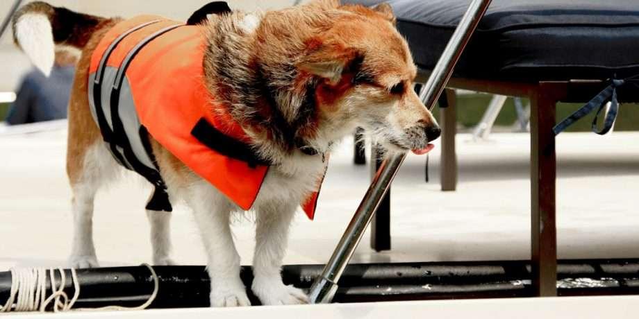 a dog wearing a lifejacket on a boat