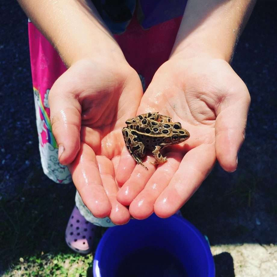 small hands hold an even smaller toad