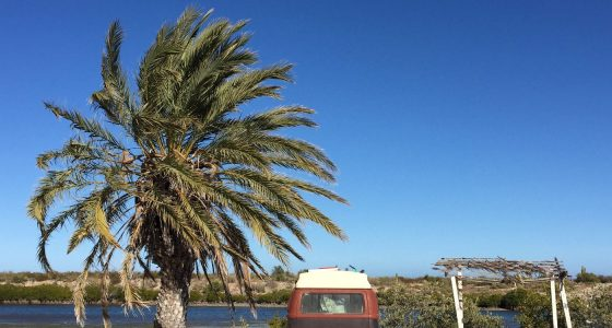 a 1978 Champagne Edition Volkswagen Bus parked between a rickety palapa and a date palm