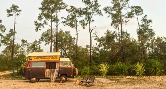 a 1978 volkswagen bus parked in the pine forests of belize near the belize zoo
