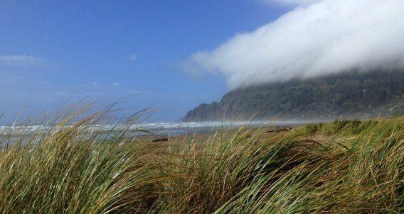 grasslands just beyond a beach near manzanita, oregon