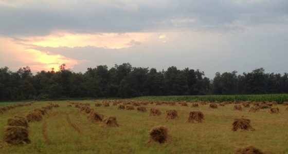 haystacks in a field at sunset